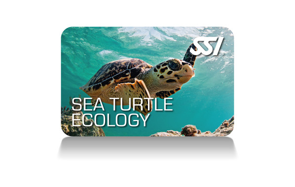 SSI - Sea Turtle Ecology